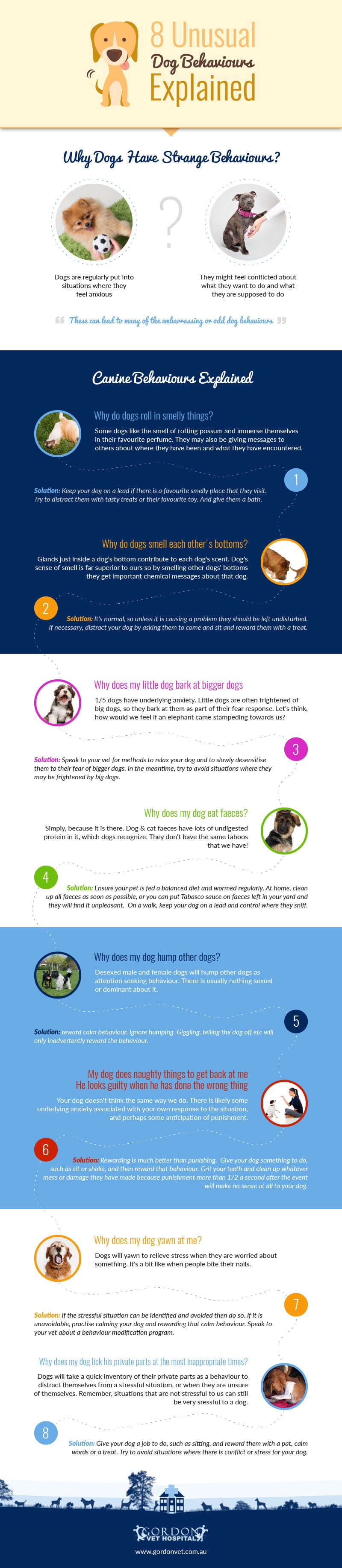 8 Unusual Dog Behaviours Explained