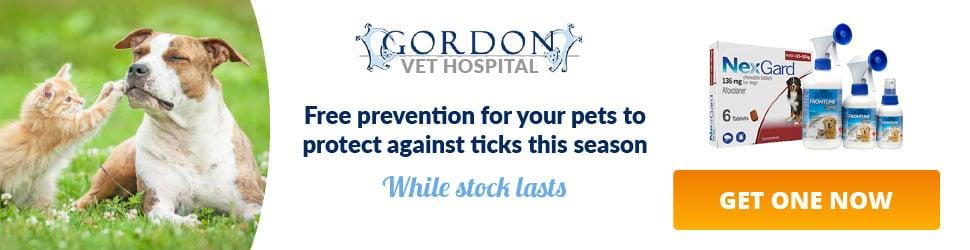 gordon vet hospital advertising